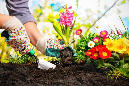 Planten kopen Friesland